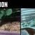 Πώς βλέπουν τον κόσμο τα ζώα (video)