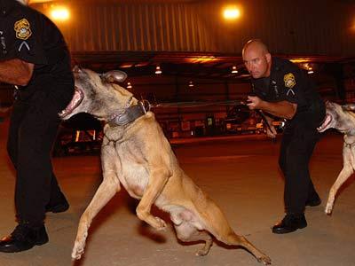 policedogbitepolicedogbite